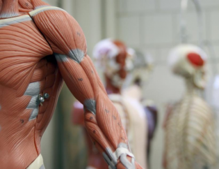 Solving The A&P Attrition Problem: A New Approach To Human Anatomy Online Courses